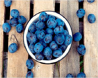 Home Satoyu Trading | Fresh Fruits Supplier Singapore